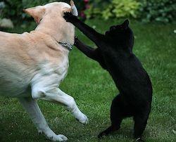 kutya macska kommunikacio