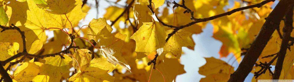 oszi levelek